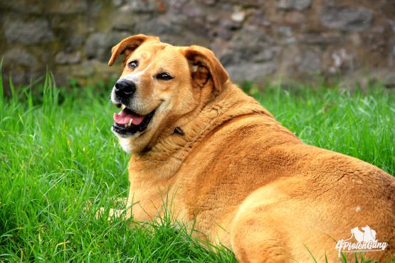 4pfotenschmaus-ernährungsplan-adipöser-Hund
