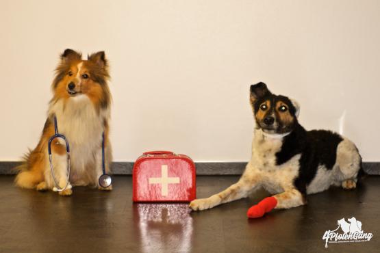 4pfotenschmaus-ernährungsplan-kranker-Hunde